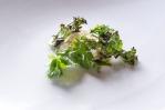 Kingfish, kale, buttermilk